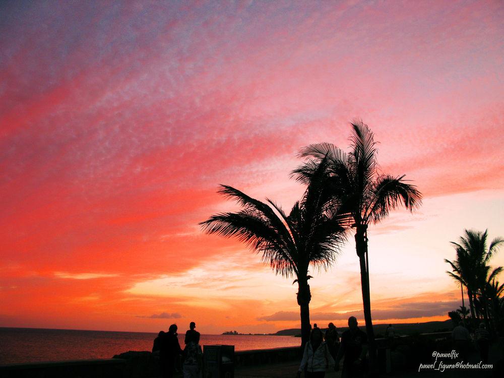 Photo in Landscape #cannes #france #sunset #palms #pawel