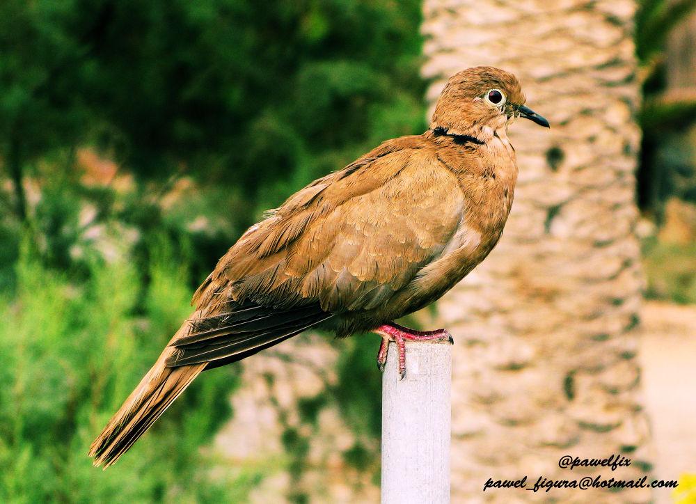 Bird by Pawel Figura