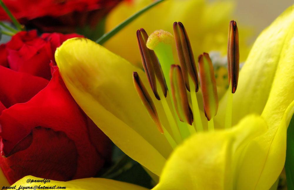 Flower by Pawel Figura