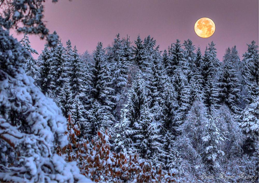 Winter by Svein Roger Reberg