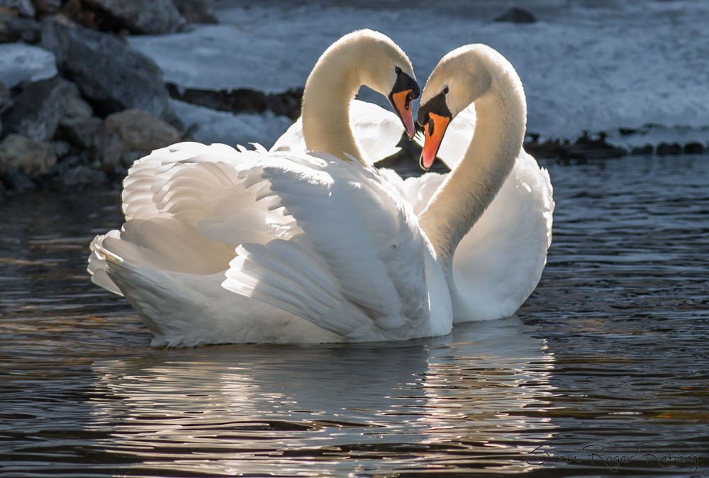 Love by Svein Roger Reberg