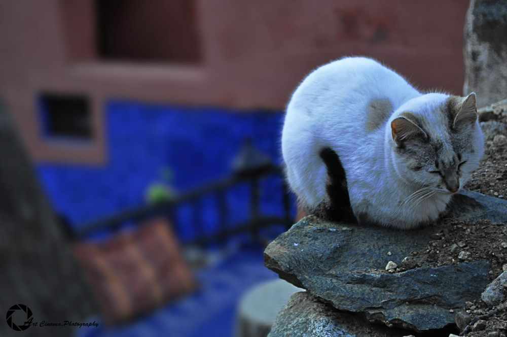 Cat Relaxing by Najib Khayati