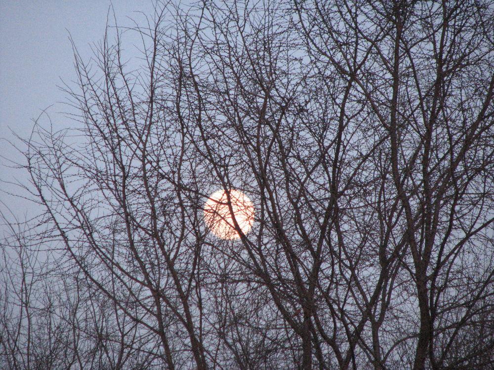Full moon hiding in trees by Natasa68