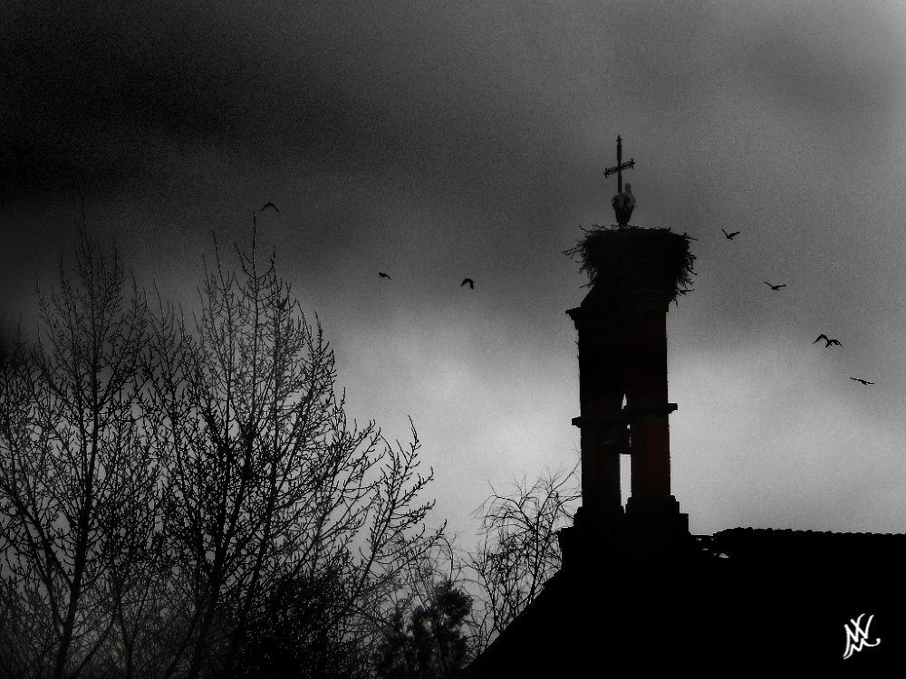 Photo in Black and White #blanco y negro #arquitectura #abandono #aves #arboles #contraluz
