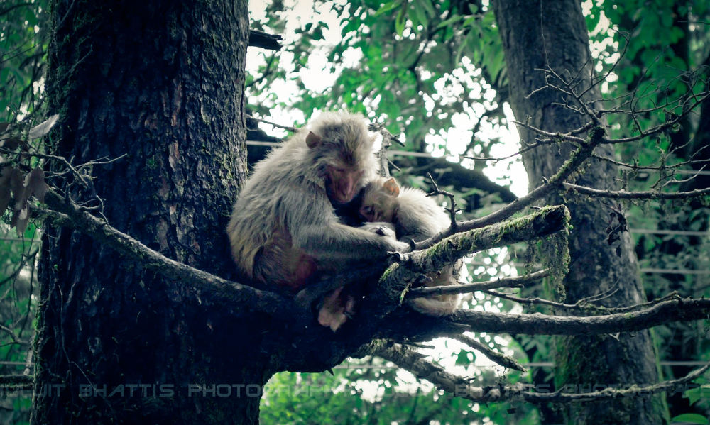 Photo in Animal #monkey #love #child #mother #motherly love #care #honest #loyal #nature #creature