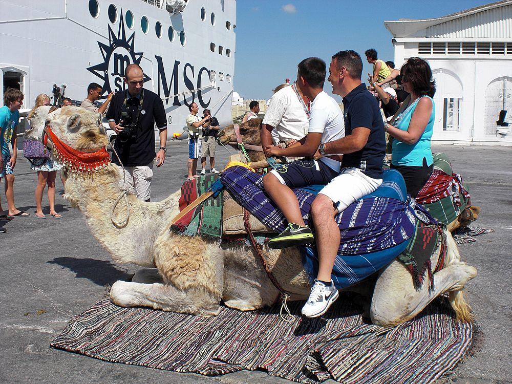 Camel by Ernesto Ievolella