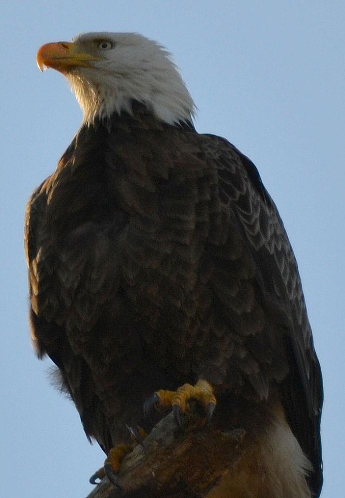 sunrise eagle 667 by jetskibrian
