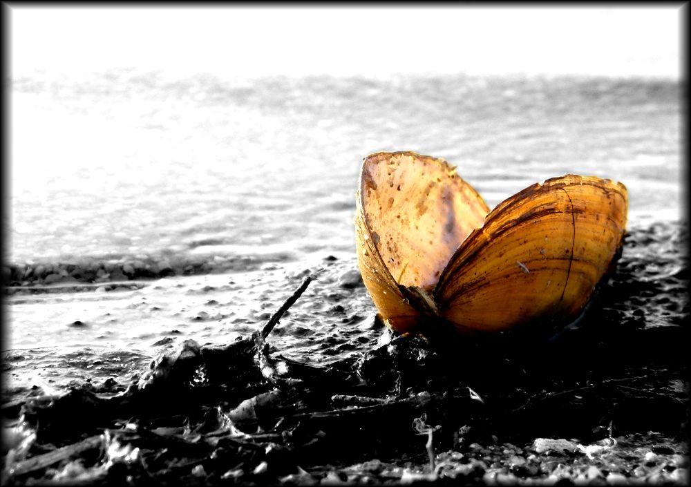 shell by jenslangenberg
