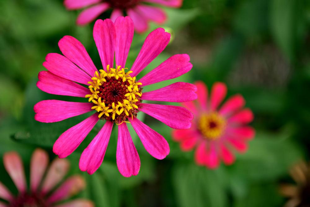 flower_pix by ChipoyCruz