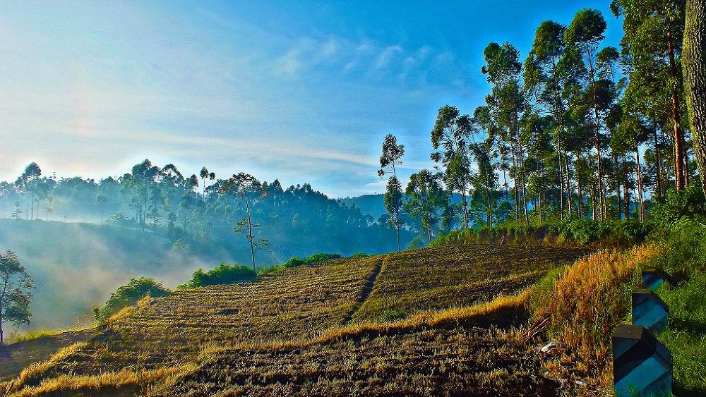 agriculture at an altitude of 2000 meters above sea level by alleo sugie