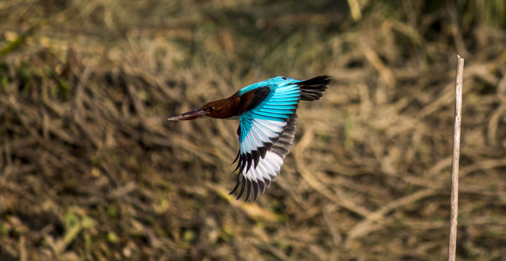 Photo in Animal #kingfisher flying