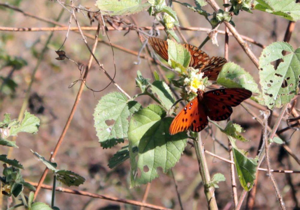 A Pair of Butterflies by Linda L. Offen