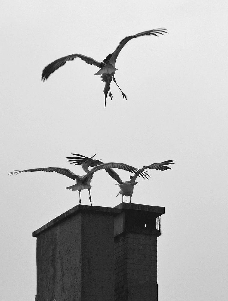 Dancing in the sky by Jean-Claude Monnerat