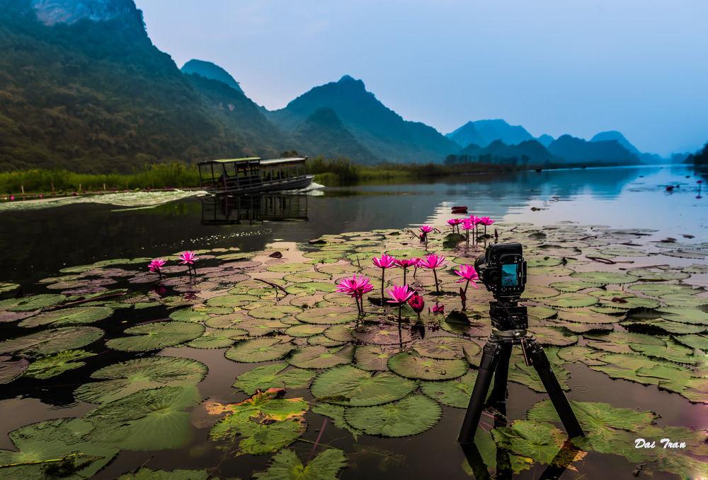 Nature lovers by Dai Tran