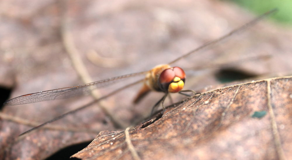 Dragon fly by Kathy7