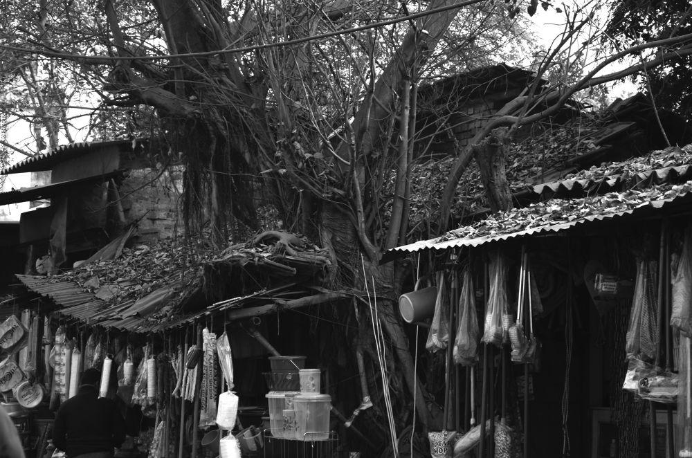 old tree by mithunn chakraborty