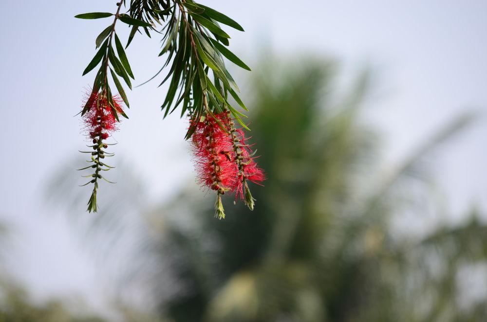 flower by mithunn chakraborty