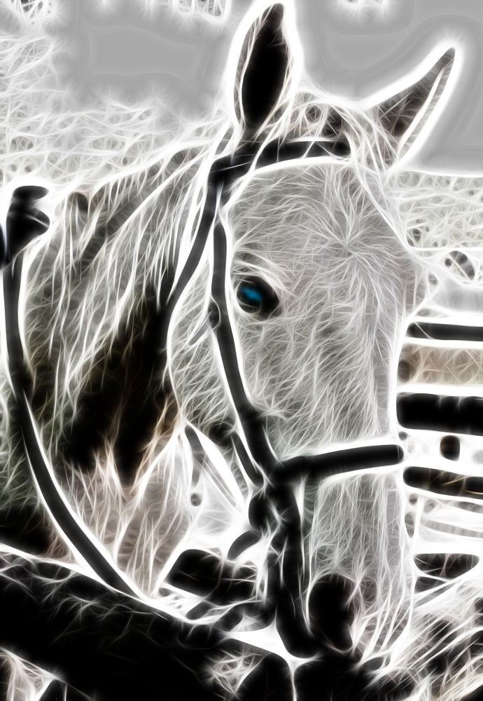 horse fractalius filter by photocraftsa