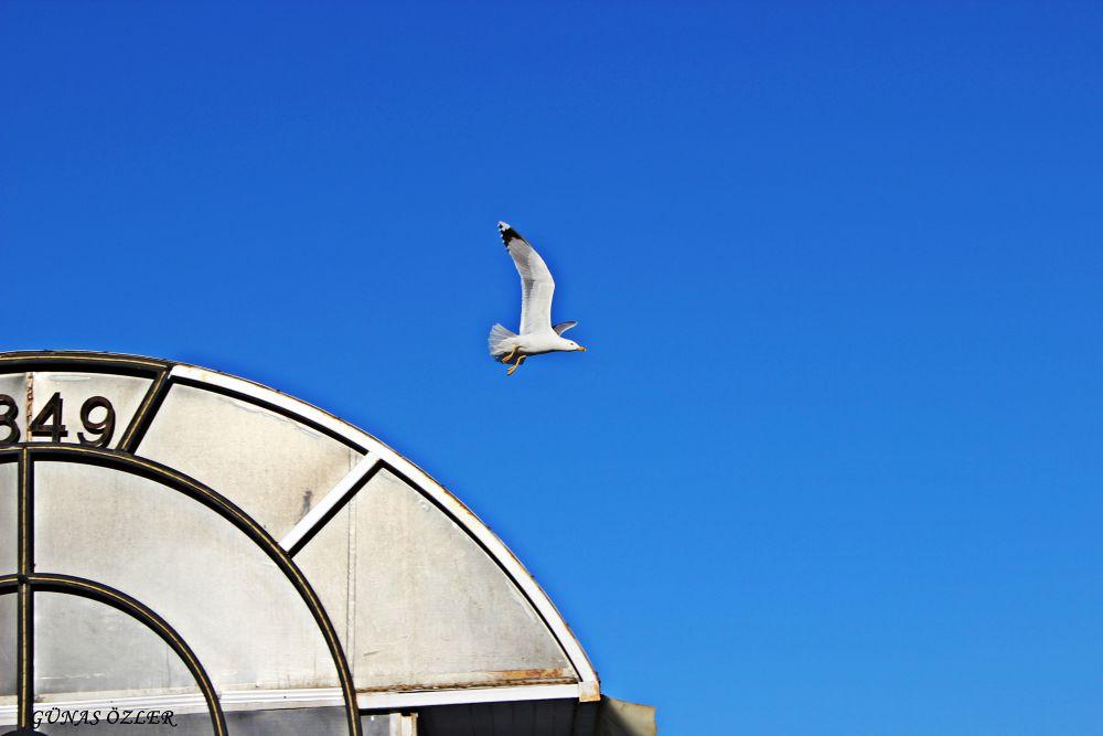 Lonely seagull by Günas Özler