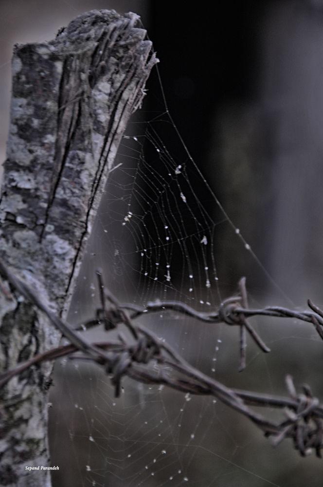 Cobweb by sepandparandeh