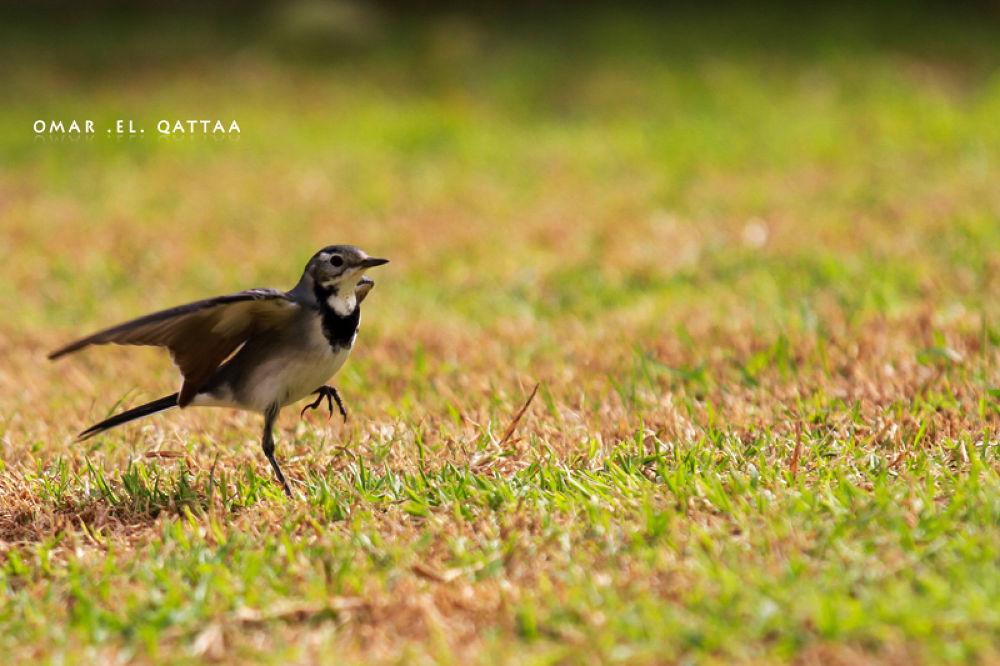 Bird by Omar El Qattaa