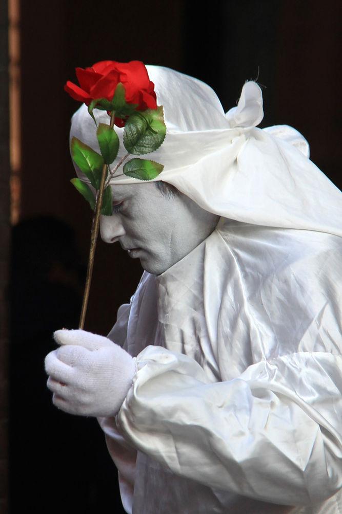 red rose by Patricia de la Lama