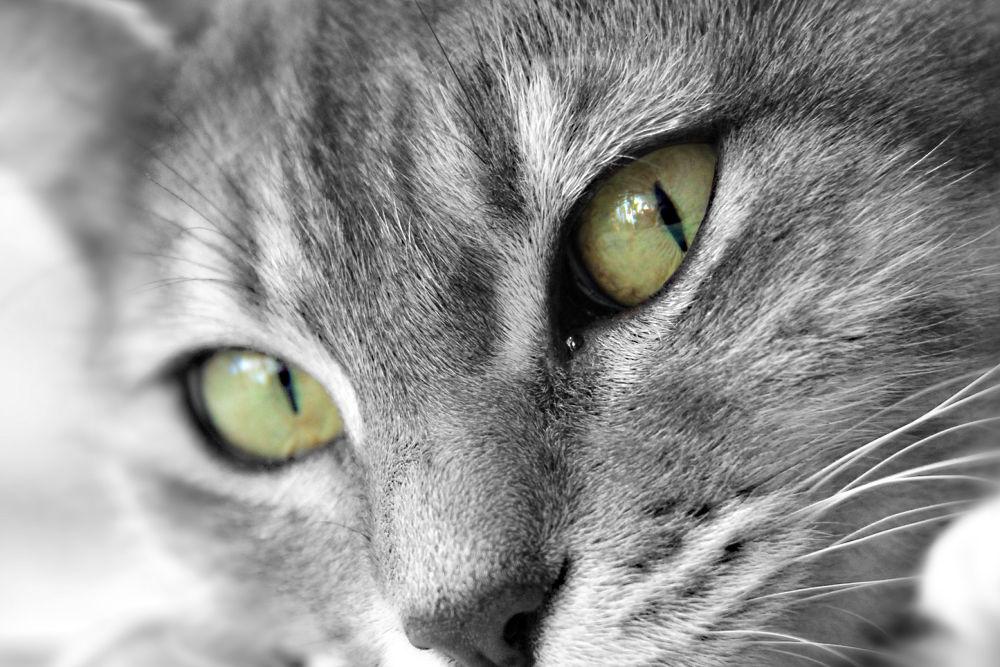 Green eyes by Patricia de la Lama