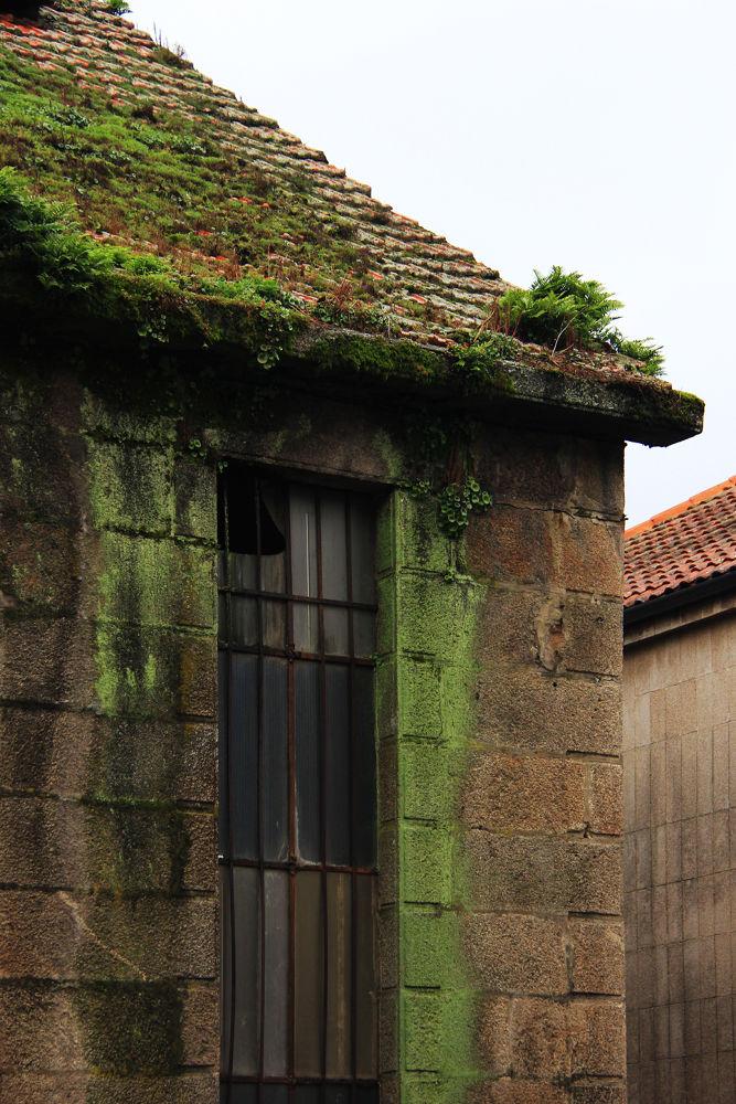 Green walls by Patricia de la Lama