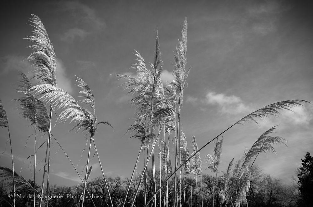 La Nature,Un Regard by Nicolas Marguerie Photographies