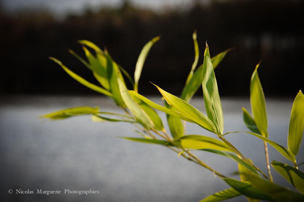 Photo in Nature #france #province #nature #landscape #paysage #branches #arbres #fleurs #flowers #eau #etangs