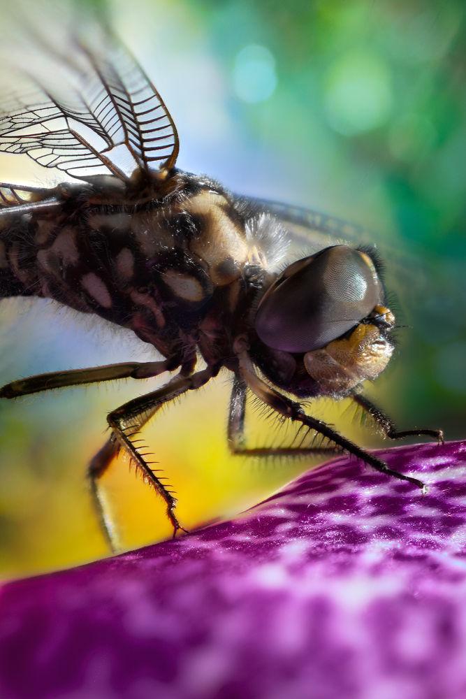 Photo in Macro #dragonfly