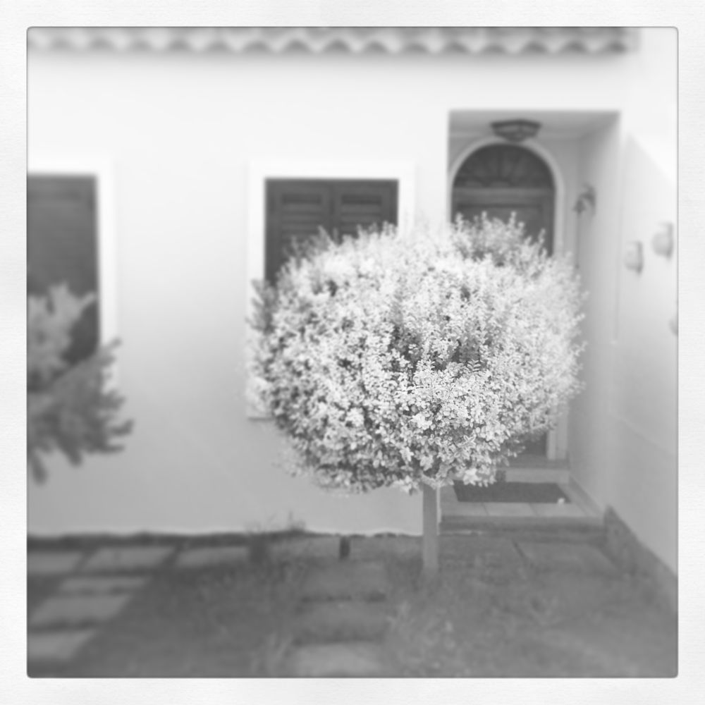 A tree visiting the house by Giovanna Iorio