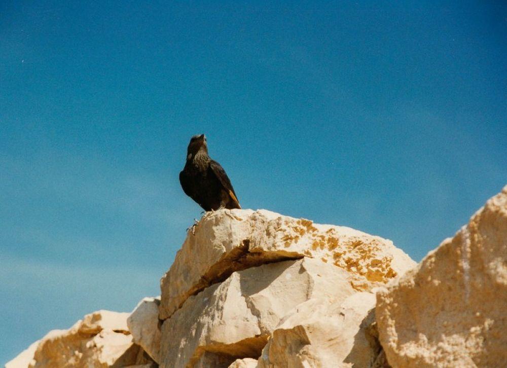 Israel_Masada-117 by Arie Boevé
