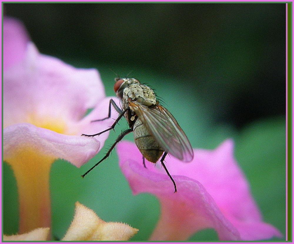 Photo in Macro #insetti   fiori