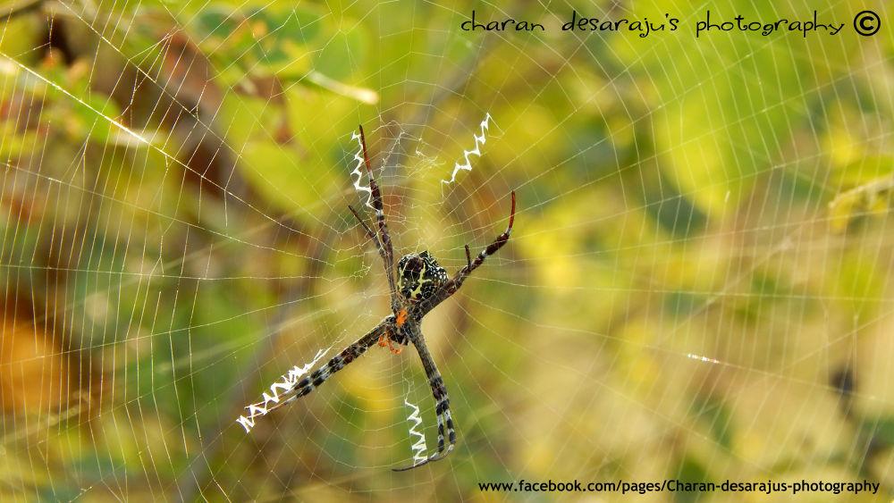 spider by desarajusaicharan