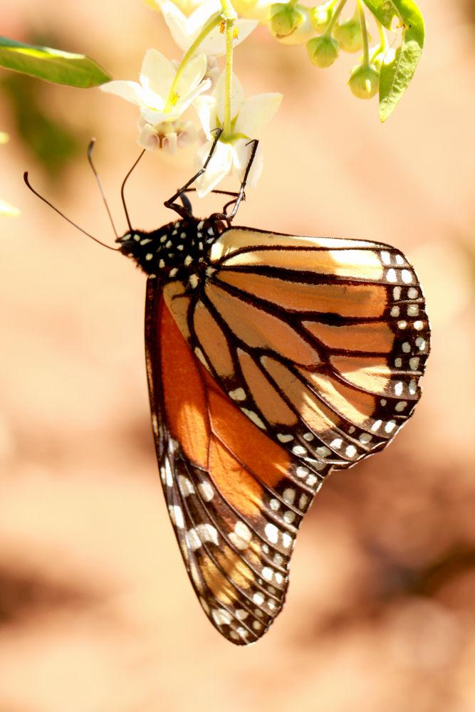 borboleta by Albano Nascimento