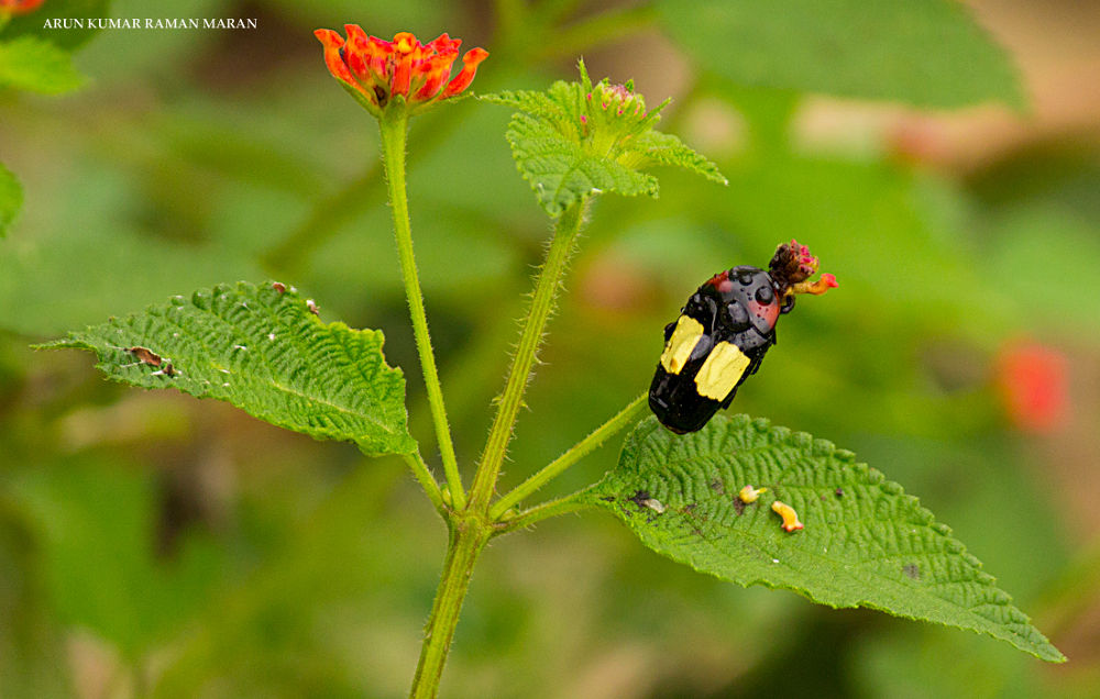 Bug & Flower by Arun Kumar R M