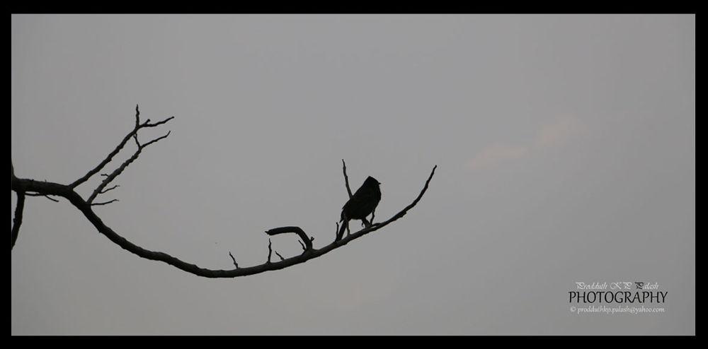 bard waiting 060114_02 by Prodduth KP Palash