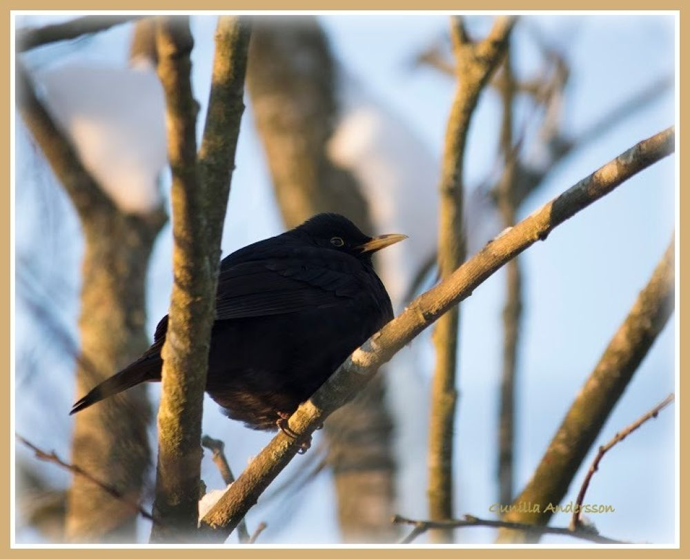 Photo in Nature #birds #nature
