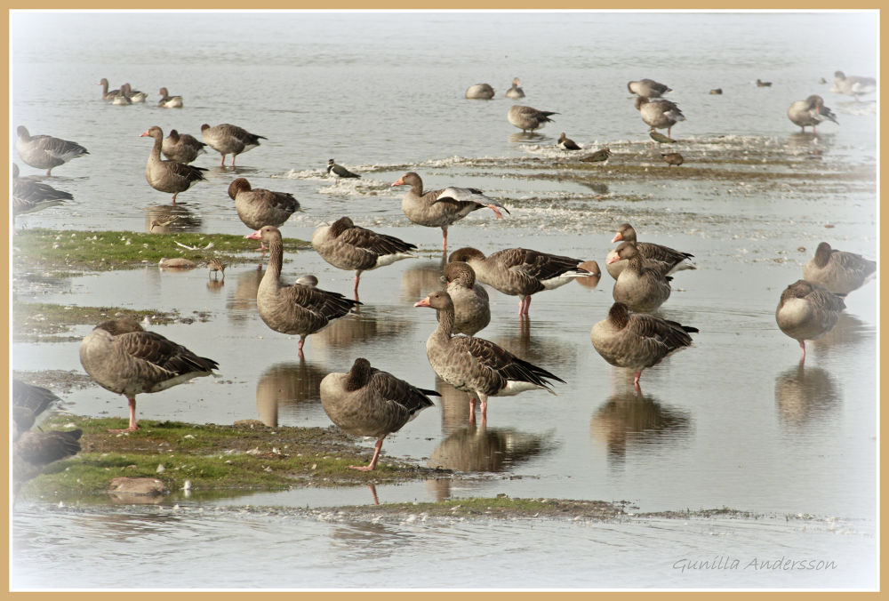 Photo in Nature #animal #nature #birds