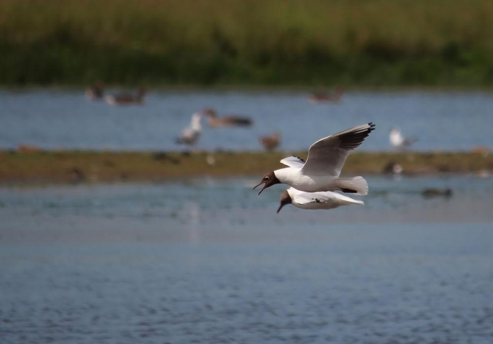 Photo in Nature #birds #animal #nature