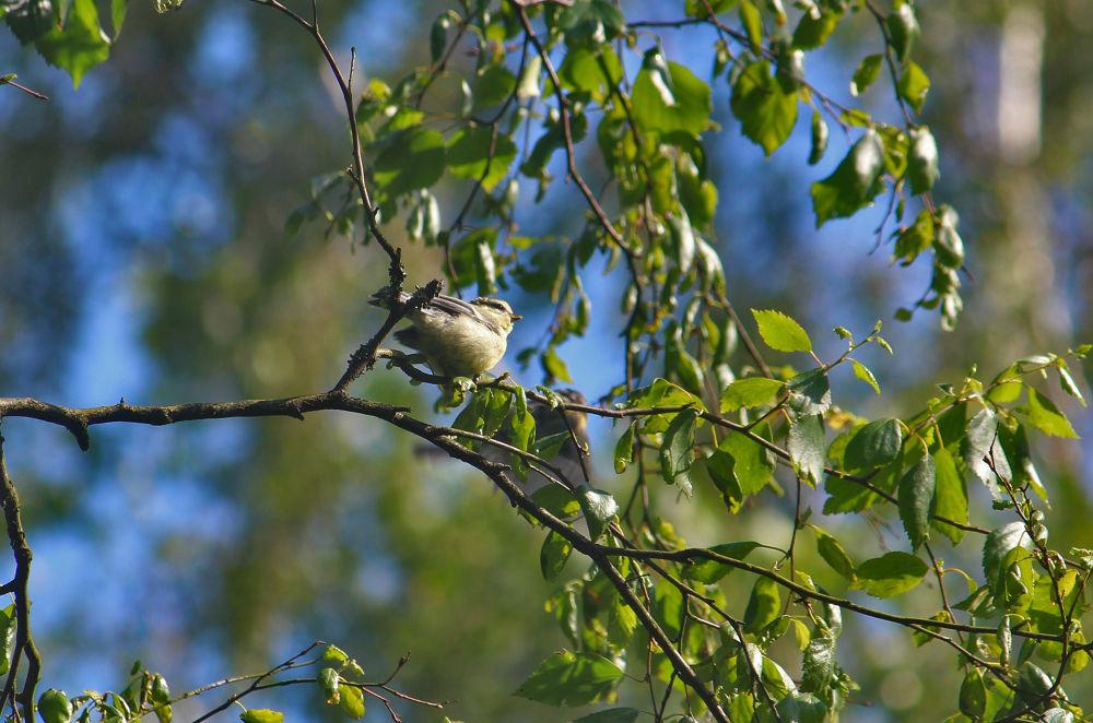 Photo in Nature #bird #animal #nature