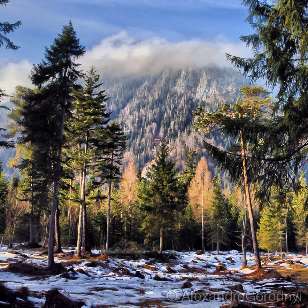 Photo in Landscape #forest #alps #germany #ruhpolding #bayern #chiemsee