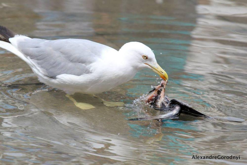 Photo in Animal #venezia #italia #bird #city
