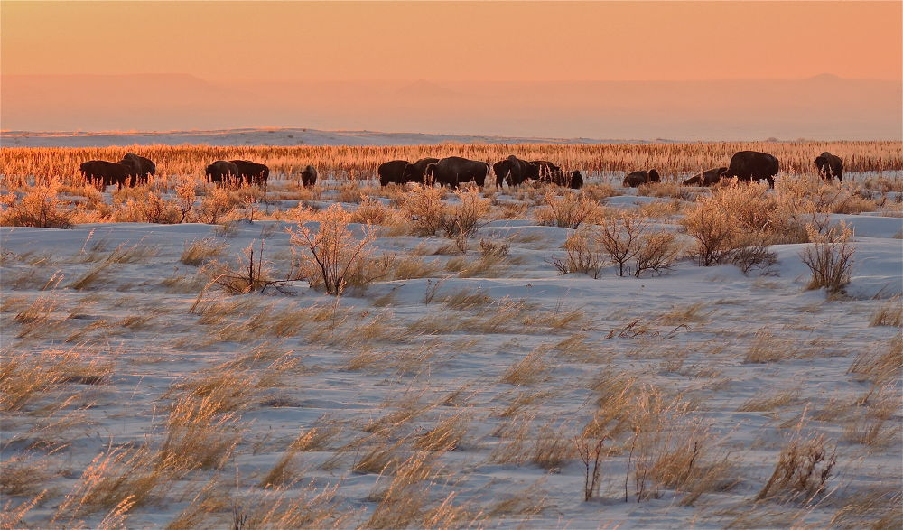 'SUNDOWN' ON THE BISON PLAINS by Wes Bloom