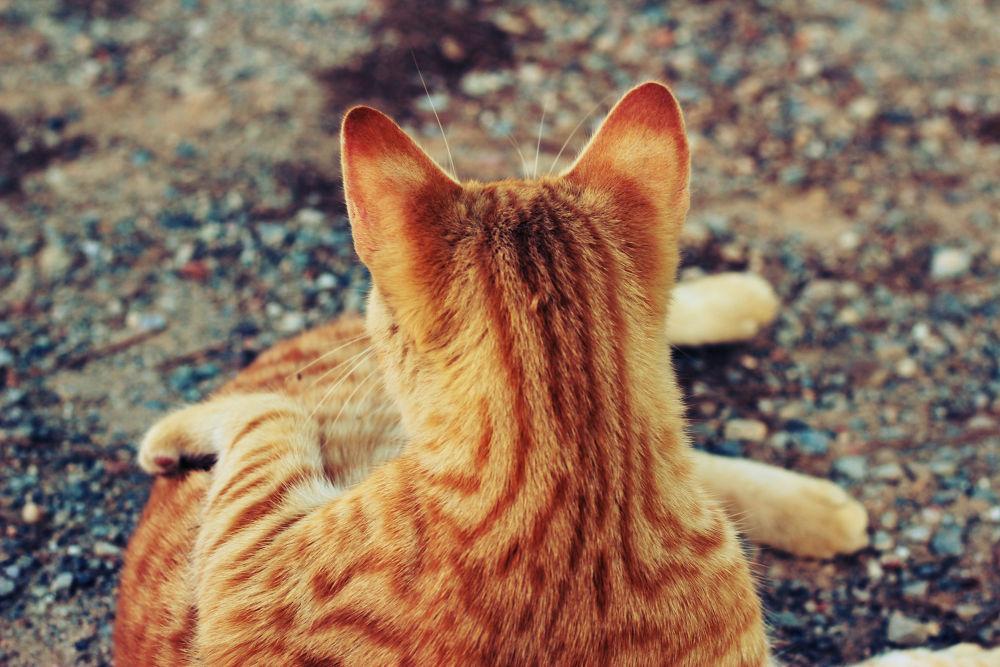 Stray Cat by vesperhz
