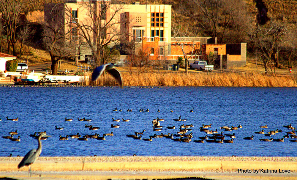 Canada geese and herons IMG_3870 by klove