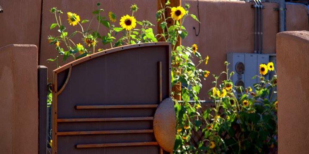 Santa Fe wildflowers by klove