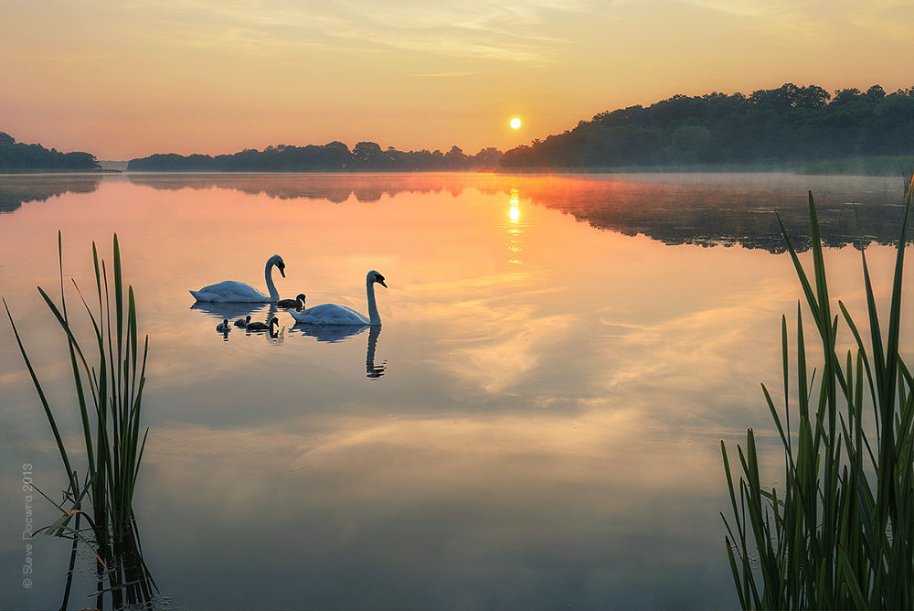 Dawn tranquility on the Norfolk Broads by stevedocwra
