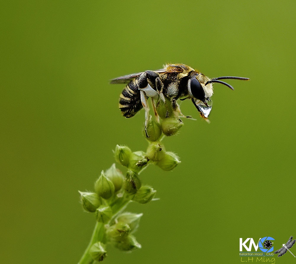 Bee, Natural Light, Kg Sg Limbat by lee hua ming